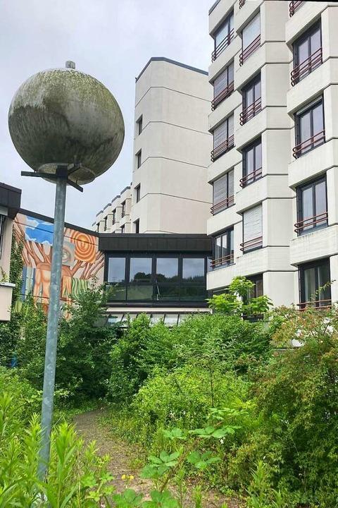 Pflanzen wuchern über Weg und Eingangs...-Klinik steht seit vielen Jahren leer.  | Foto: Claudia Müller
