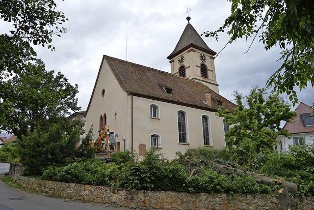 Zeder an der Kirche