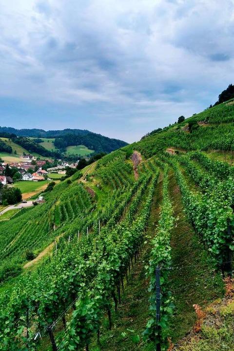 """Die Weinlage """"Roter Bur"""" e...sich bis auf eine Höhe von 500 Metern.    Foto: Erik Kunz"""