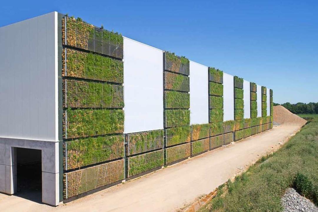 Eine Wand der neuen Gewerbehalle der F...n ist zu großen Teilen begrünt worden.  | Foto: Birkenmeier Stein & Design