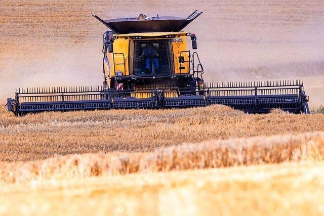 Hitze und Starkregen belasten die Landwirtschaft – auch in Südbaden