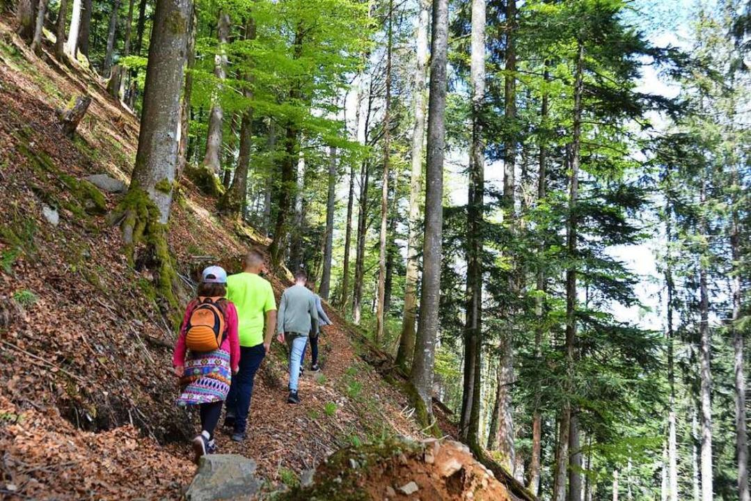 Zieht nicht nur Kinder in den Bann: Der Bannwald von St. Wilhelm  | Foto: Anita Fertl