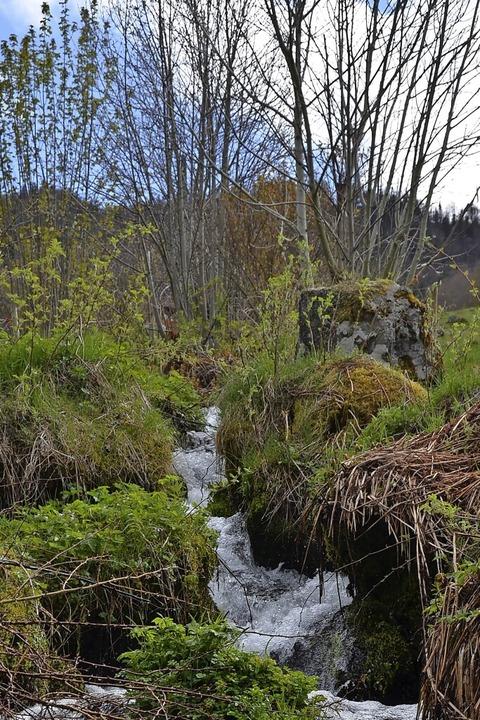 Hingehört: Mit offenen Ohren durch die Natur  | Foto: Anita Fertl