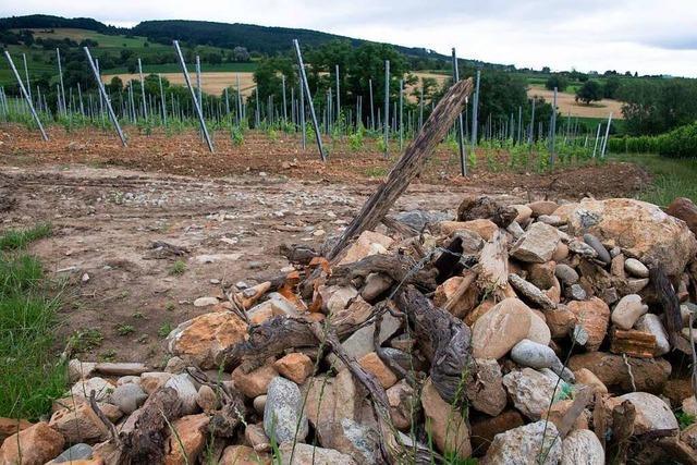 Im Markgräflerland gibt's immer wieder Ärger wegen Aushubmaterial auf Äckern