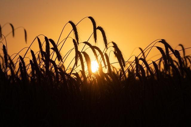 Preise für Nahrungsmittel explodieren global – arme Länder besonders betroffen