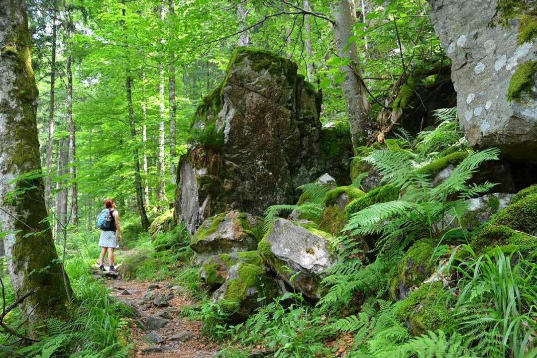 Anblick:  ein tolles Stück Natur  | Foto: Anita Fertl