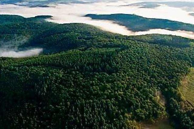 Eine Kampfansage für einen neuen Umgang mit dem Wald