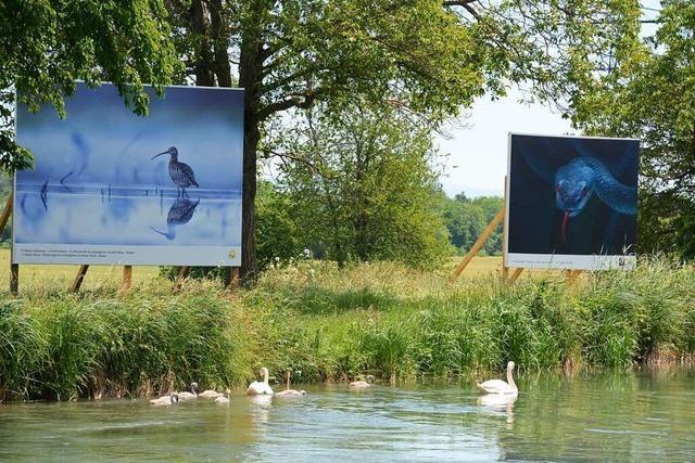 Im Dreiländereck gibt es eine 14 Kilometer lange Fotoausstellung