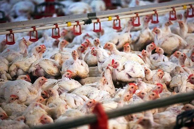 Warum ist Fleisch so billig?