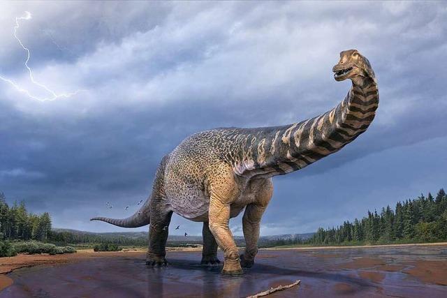Warum werden immer wieder Dinos entdeckt?