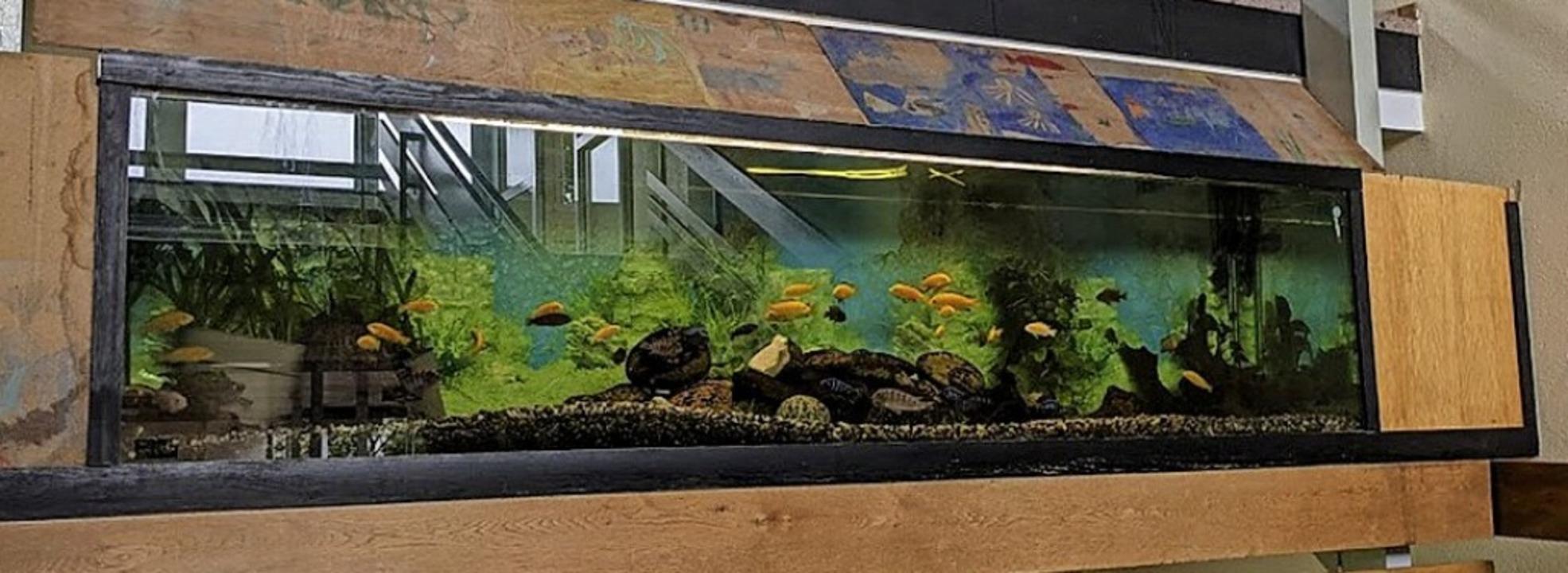 Das alte Aquarium in der Isteiner Grundschule wird erneuert.    Foto: Selina Denzer