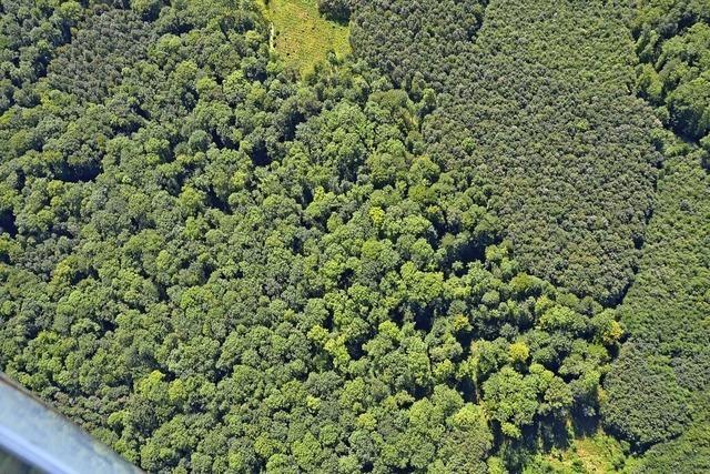 Holzvorrat sinkt um sieben Prozent