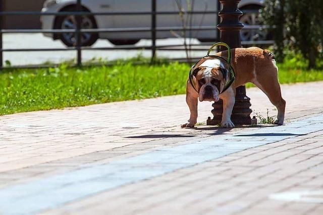 Hunde-Urin lässt Ampelmast in Japan umstürzen