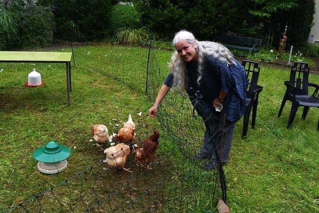 In Bad Säckingen gackern Hühner im Garten des Altenheims