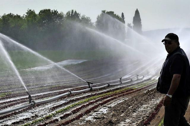 Landwirt David Mild sagt, Niederschlag sei wichtiger als Düngung