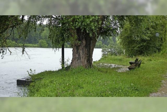 Der Rhein tritt vielerorts übers Ufer