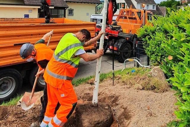 In Lörrach gibt es ein neues Konzept für Stadtgrün und -bäume