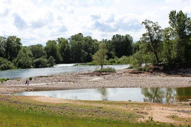 Hochwasserschutz: Zwischen Märkt und Kleinkems hat der Rhein mehr Platz bekommen
