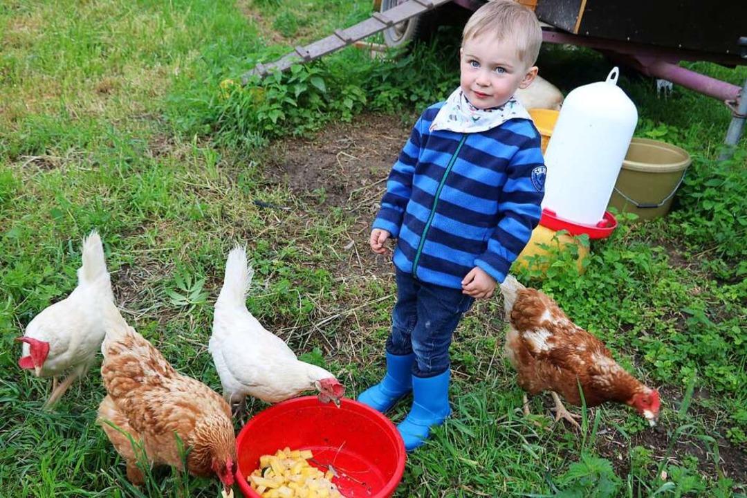Der kleine Lias besucht gerne die Hühn...ls, am liebsten, wenn Küken schlüpfen.    Foto: Martha Weishaar
