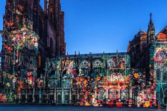 Mohnblüten wachsen am Straßburger Münster empor
