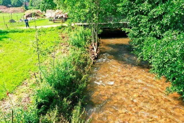 Weidenspreitlage soll dem Hochwasserschutz in Langenau dienen