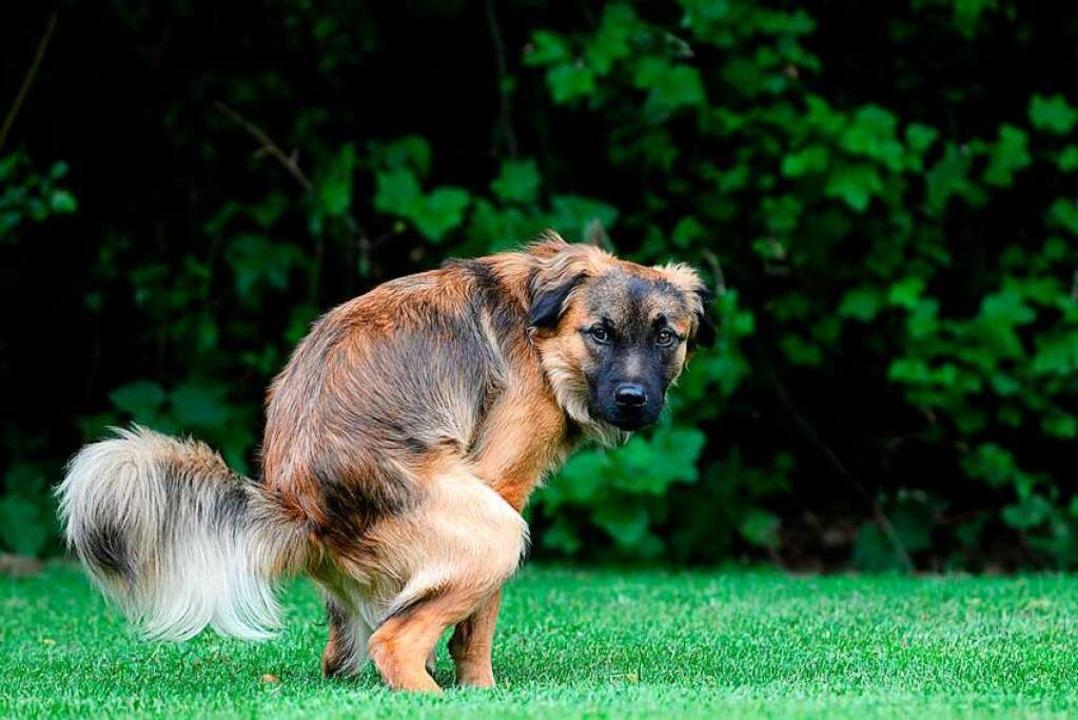 Dass ein Hund am Dreisamufer ins Gras ...ekannten in Rage gebracht. Symbolbild.  | Foto: Fotolia.com/Carola Schubbel