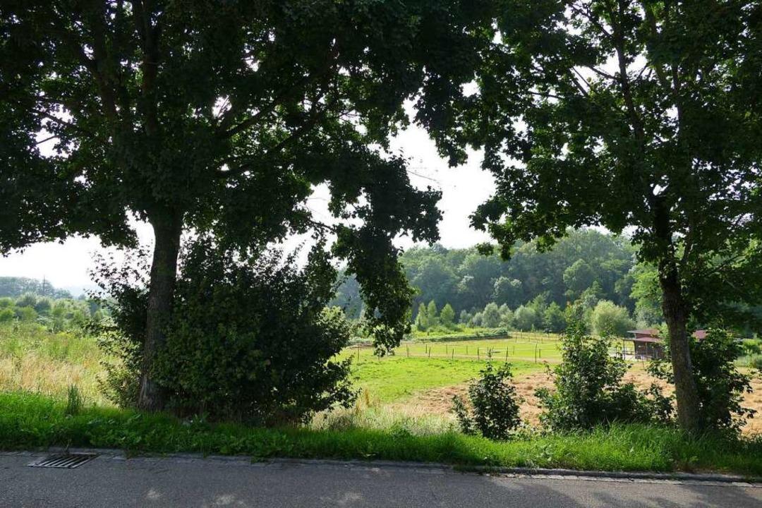 Die Bäume am Breitenstein sollen trotz der Baumaßnahmen dort erhalten werden.  | Foto: Victoria Langelott