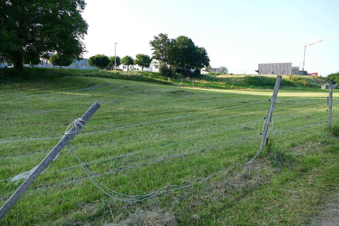Rund ein Hektar Land, das ans Gewerbeb...morwerk Stächelin will dort erweitern.  | Foto: Victoria Langelott