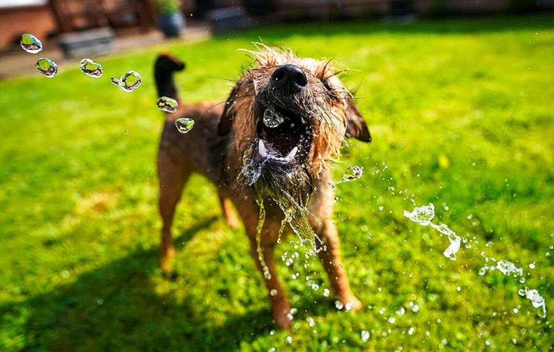 Auch die Hundesteuer brachte mehr Einnahmen als geplant (Symbolbild).    Foto: Steve Parsons (dpa)