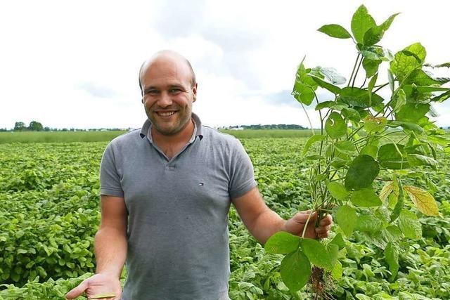 Edamame-Bohnen werden nun auch in Bad Krozingen angebaut