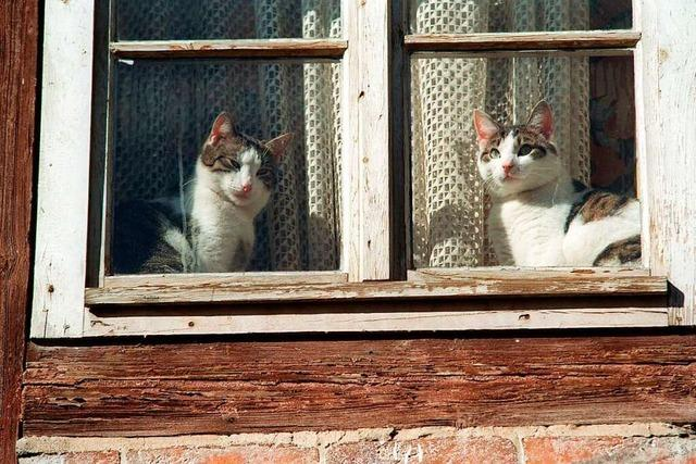 Streunende Katzen in Norsingen sollen strenger kontrolliert werden