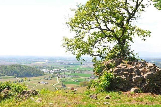 Burg Höhingen bei Achkarren beflügelt die Phantasie von Schatzgräbern