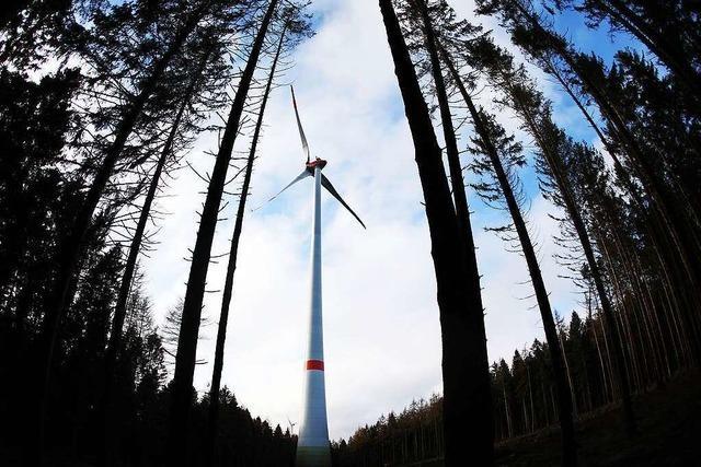 Land will 500 neue Windräder im Staatswald bauen