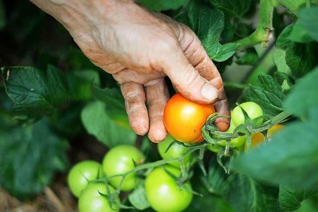 Gesundwerden durch Gartenarbeit: Wie Gartentherapie helfen kann