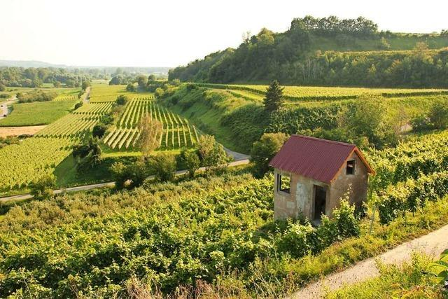 Was können Winzer für mehr Artenvielfalt in den Reben am Oberrhein tun?