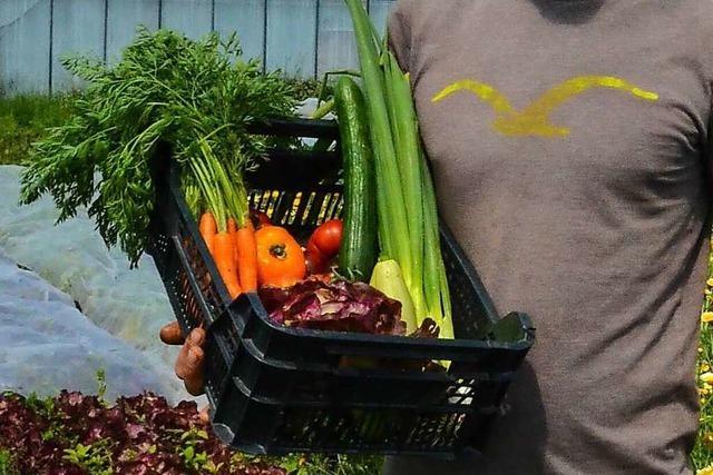 Bugginger Gemüsekisten-Lieferdienst Regna Sonnengemüse setzt auf regenerativen Anbau