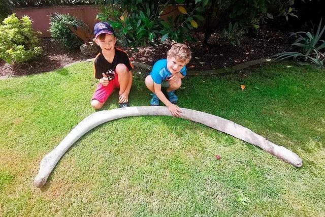 Jungs aus Lahr finden Riesenknochen im Flüsschen Schutter