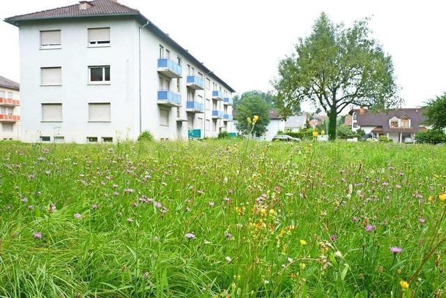 In Breisach soll ein neues Stadtquartier mit über 200 Mietwohnungen entstehen