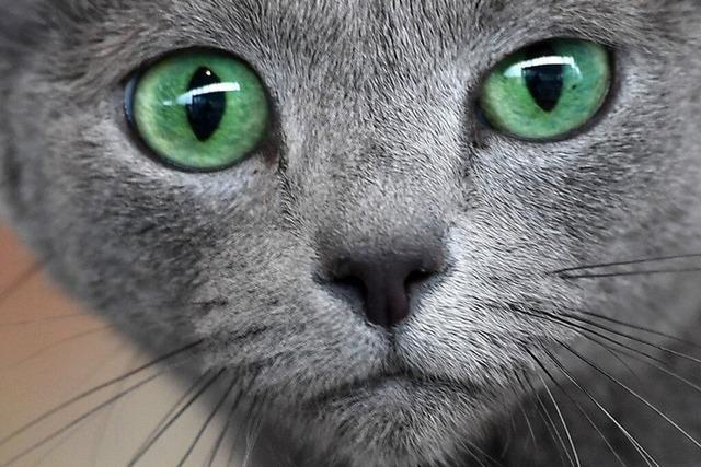 Wieder ist eine illegale Tierfalle in Schuttern entdeckt worden