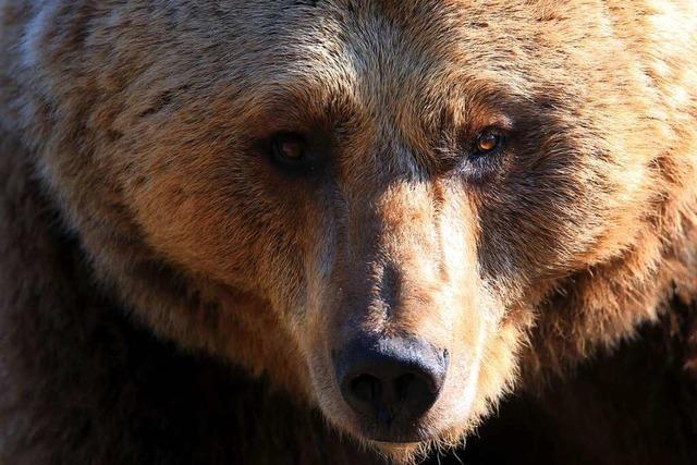 Eine Frau begegnet einem Bären
