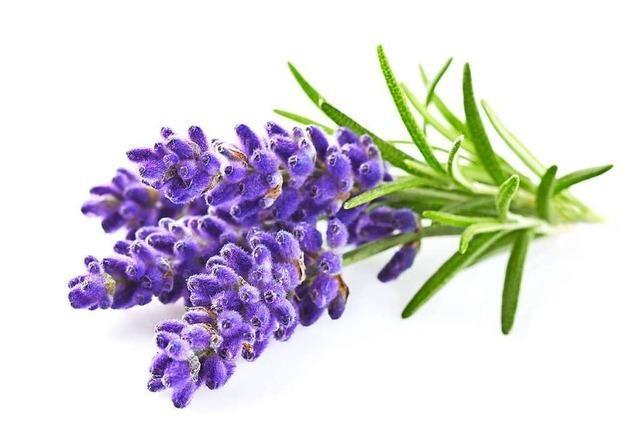 Der Lavendel beruhigt und stärkt