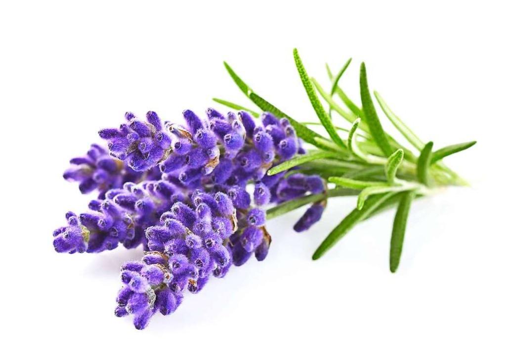 Lavendel  | Foto: Dionisvera (stock.adobe.com)
