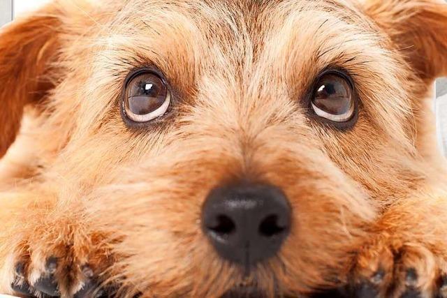 Hunde sind Menschenversteher – warum eigentlich?