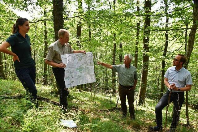 Wald ist wichtiger Faktor für den Klimaschutz