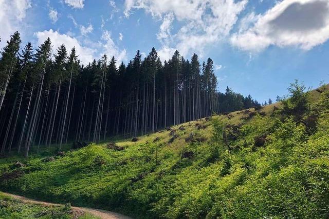 Eine Initiative hilft Privatwaldbesitzern bei der Aufforstung