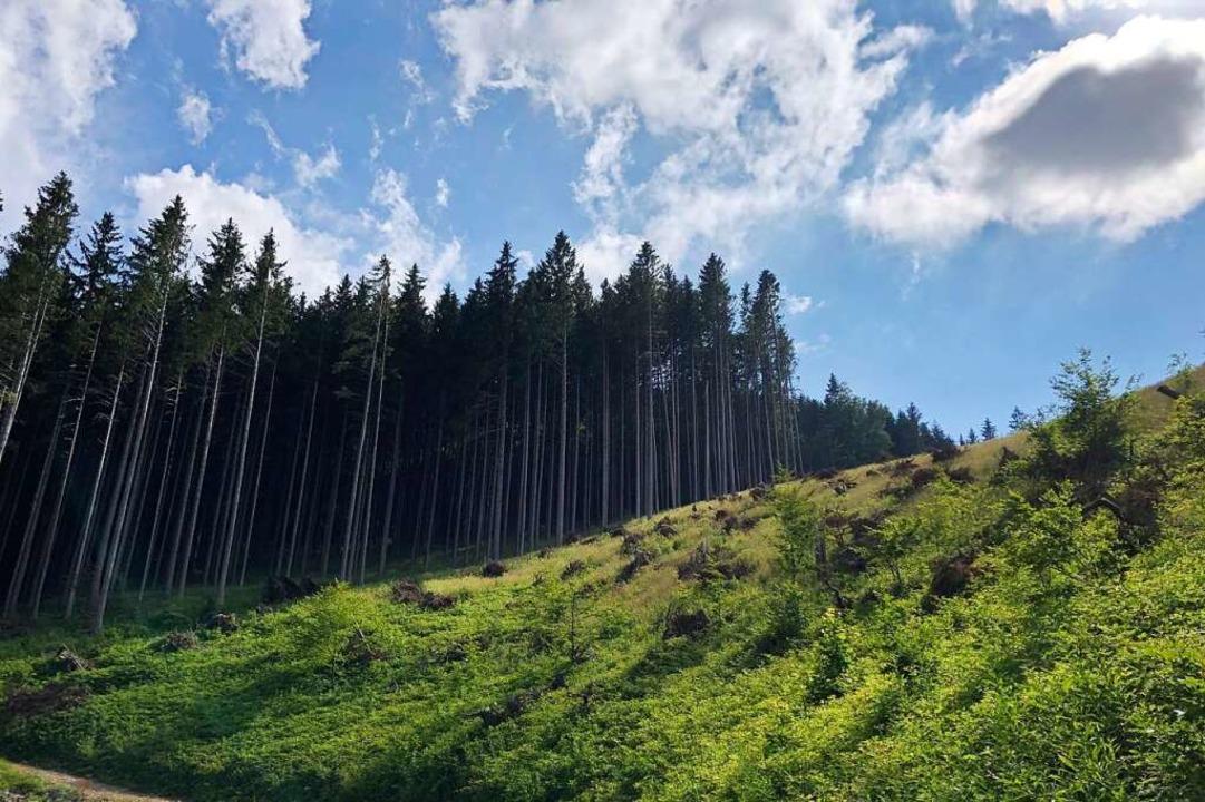 """Diese brachliegende Waldfläche in Ober...8222;myreforest"""" angehen möchte.    Foto: Andrea Thoma"""
