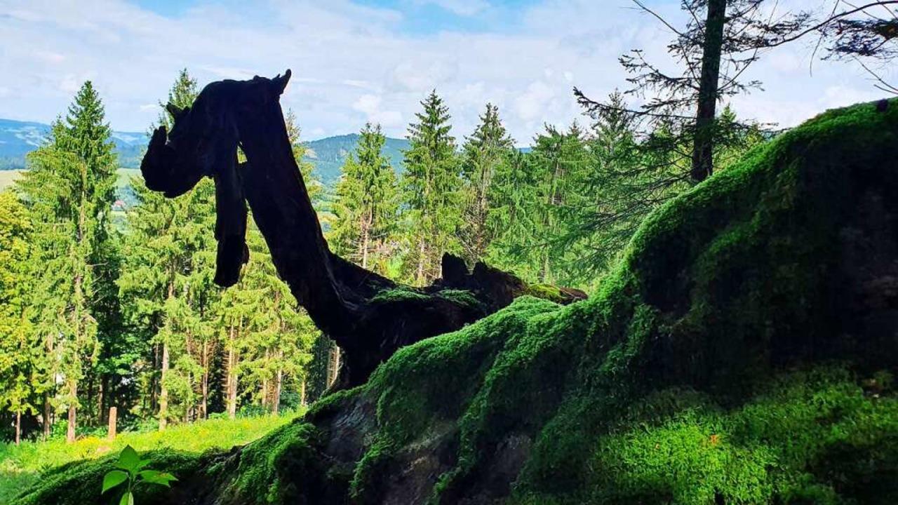 Sieht aus wie das Ungeheuer von Loch N...lt es sich um die Wurzeln eines Baums.  | Foto: Daniel Schneider