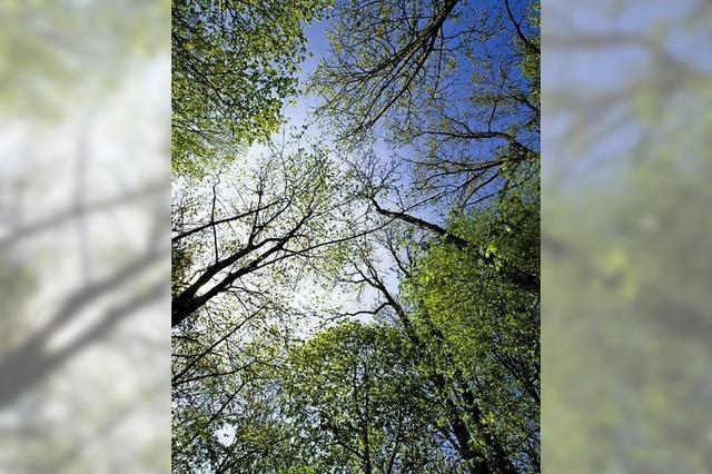 Klimawandel macht auch in Sölden einen Waldumbau erforderlich