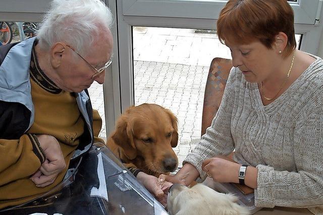 Sind Haustiere in Seniorenheimen erlaubt?