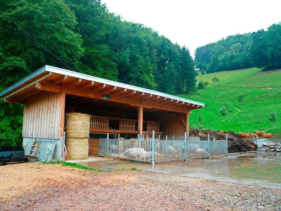 Der neue Schweinestall wurde 2019 erbaut.  | Foto: Nina Herrmann